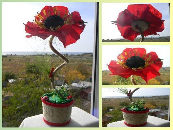 Маки - красивые цветы, а топиарий «Маки» из кофе - очень интересная композиция