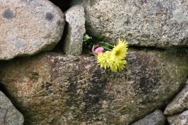 Настойчивость и упорство: как преодолеть трудности