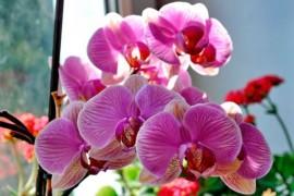 Какие бывают орхидеи и как за ними ухаживать