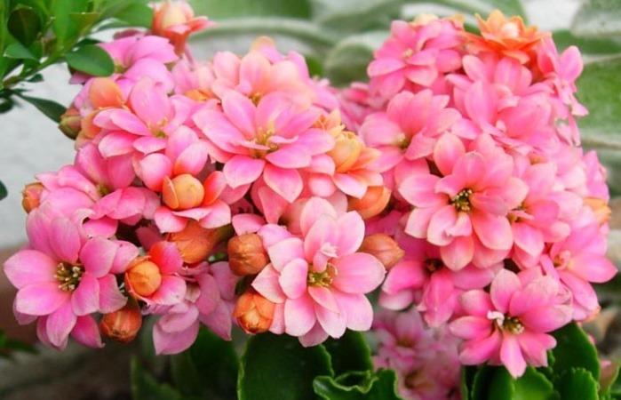 Так выглядит цветение