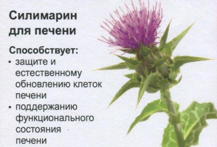 Силимарин для печени